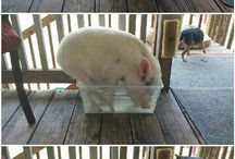 Cute/funny animals / by Shirley Carter