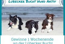Hunde an der Lübecker Bucht / Nancy Marx gewinnt das Hunde-Wochenende in Scharbeutz an der Lübecker Bucht. Viel Spaß mit Anouk beim Agility und herzlichen Glückwunsch!  Eure Teilnahme am Facebook-Gewinnspiel war super, vielen Dank für eure Likes und Kommentare.  Erfahre mehr über Anouk un sein Frauchen über unseren Blog ... http://goo.gl/A4yf1Y