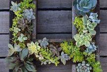 Outdoor garden and walkways
