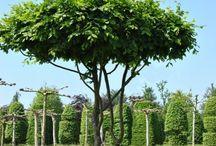 bomen en heesters