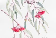 Botanical Art / Just gorgeous art of plants, one of my favourite art genres, especially watercolour pieces...