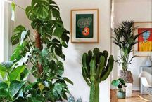 Plantes d'interior