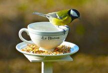 Mangeoire à oiseaux