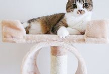 Cute cats on our products / Send us a picture of your cat on our Kitty Mansion for a chance to be put on our board.