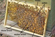 Μελισσοκομία / Οι μέλισσες έχουν την τάση να δημιουργούν φωλιές και να παραμένουν μέσα σε τρύπες, σε κουφάλες δέντρων κλπ. Αυτό οδήγησε τον άνθρωπο στη σκέψη ότι είναι δυνατό να τις συλλάβει και να τις βάλει να ζήσουν μέσα σε κάποιο κουτί, που να μοιάζει με κουφάλα δέντρου ή με τρύπα σε βράχο, προκειμένου να παράγουν μέλι γι' αυτόν.