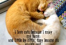I LOVE Kiddies!!!! / All Things Cat--Great and Small / by Charlotte Ware