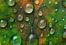 Nature / by Stephanie Barnett
