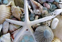 Coastal Details - Nature