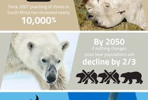 IFAW // Infographics / by The International Fund for Animal Welfare - IFAW