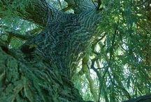 TREES!!