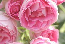 vilacy flores e rosas