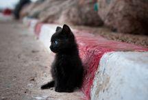 Pretty Kitty! / Kitty cats