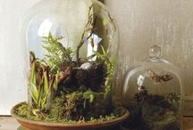 a garden with frogs
