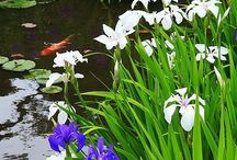 Pond life / Art quilt inspirations of pond life