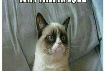 grumpy cat ❤