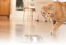 Cat Nutrition and Feeding Articles / Learning everything you need to know about how to properly feed your feline friend, including ensuring he/she receives the proper nutrient balance to grow up happy and health.