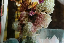 Flowers in vases / by Stephanie Kazenske