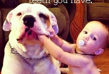 American bulldog and kids