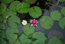 Víz a kertben / kerti tó, vízesés, dézsató stb.