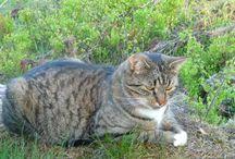 Spotten / Min katt