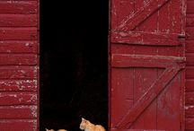 Dream Barn / by Stephanie S
