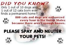 Spay/Neuter / by Animal Alliance