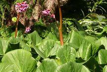 I vår trädgård