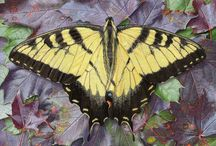 Rick Pas Paintings 1 / Insects