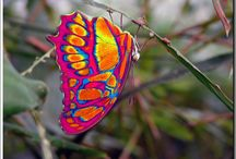 Butterflies and Bugs  / by Sandy (Girlyfrog) Eyler