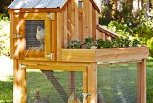 Chickens, ducks, coops, eggs, poultry and garden ideas / by Chelsea Meissner