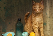 Cat Art Ginger Cats / by Charlotte b