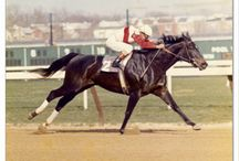 Ruffian: 1972 April 14.-1975 July 7.
