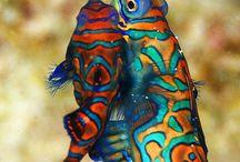 fishyfishy