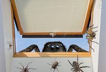 sposoby na pajaki