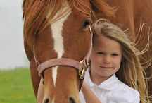 HORSE - The Beautiful and Powerful of Horse