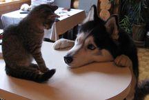 ハスキーとネコ