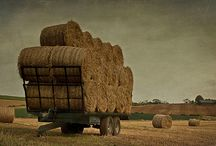 Country Life / by Marsha Jennings Grounds