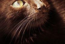 animals / by Laura Stanton