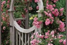 gardening / by Missy Traub