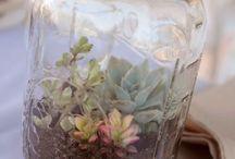 plants  / by Erika Flaig