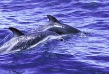 Dolphins / One of our favorite IMAX films is playing only through September at the Heikoff Giant Dome Theater! / by Reuben H. Fleet Science Center