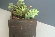 Succulents for the home / I believe that every person and every home deserves a succulent that brightens up a room and cultivates positive energy. I believe that plants help improve peoples lives.
