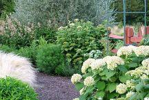 Garden plants and ideas