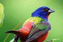 Birds / by Doug Hiser