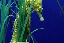 Underwater World :♦