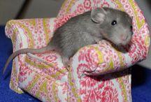 Ratten / Ratten