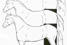 Riding theory/lesson ideas / All things horse