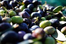 Olive treea