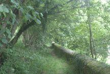 Asturias,paraíso natural / Asturias,natural paradise