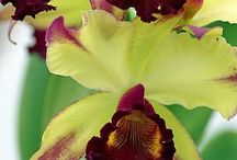 Orchids I wont to have